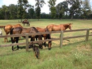 board your horses near the woodlands and conroe. Montgomery Texas