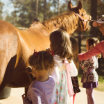 pony borthday parties near the woodlands texas