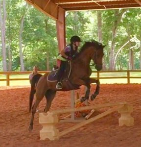 edgebrook equestrian center lesson horse Prince