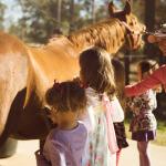 pony borthday parties near the woodlands texas
